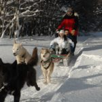Ushuaia Trenós Cachorros 2